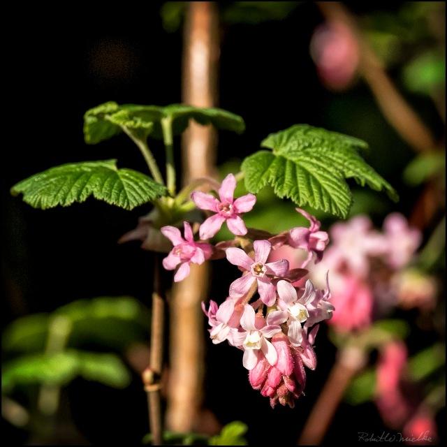 Flower 1493